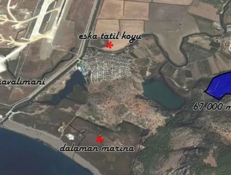 Dalaman Kapukargın Mahallesinde Satılık 67.200 M2 Zeytinlik